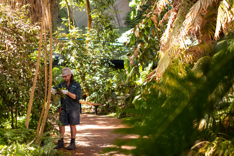 Ryan, a gardener at the Botanic Gardens of South Australia
